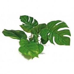 Rastlinka Anubias 15cm