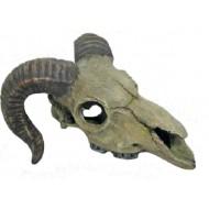 Barania lebka 14,5x13,5x7,5cm